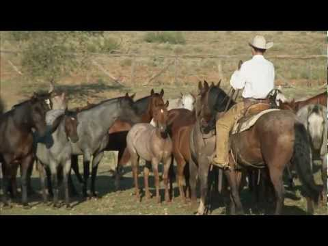Tongue River Ranch - American Quarter Horse Program