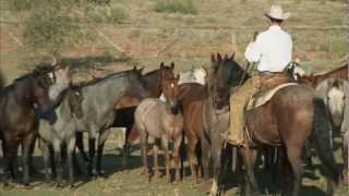 Tongue River Ranch - American Quarter Horse Program