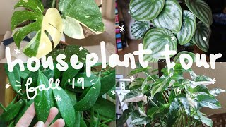 HOUSEPLANT TOUR FALL 2019 | My Entire Houseplant Collection