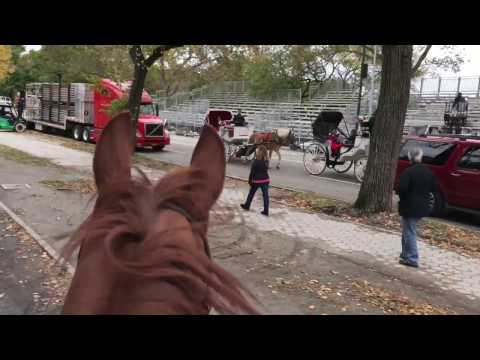 Horseback Riding in Central Park, NYC
