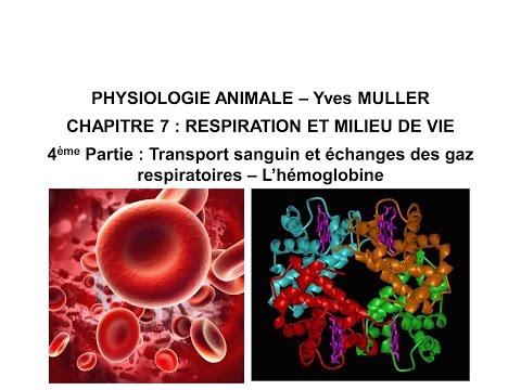 Chapitre 7-4 Transport sanguin et échanges des gaz respiratoires – L'hémoglobine