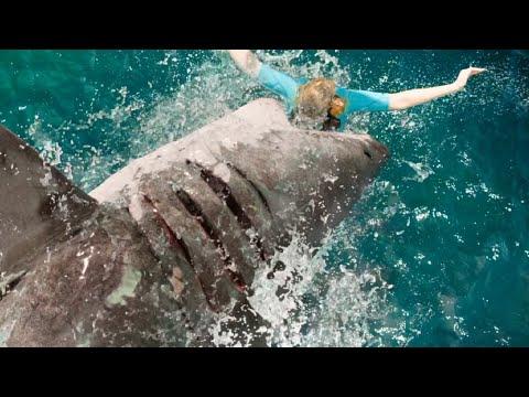 好莱坞冒险片:盲眼大白鲨袭击清纯美少女,全程紧张刺激不忍错过