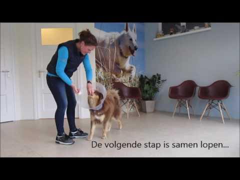 Dierenartstraining Margje Rutsen Hondentraining: aanleren hondenkraag