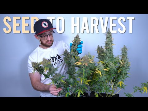 BEGINNERS SEED TO HARVEST GUIDE: AUTOFLOWER CLOSET GROW