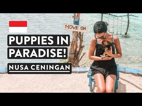 LAST DAY IN PARADISE   Nusa Ceningan   Bali Travel Vlog Indonesia
