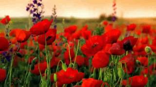 Nice Poppy Field -  Images