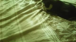 Кошка ловит красную точку