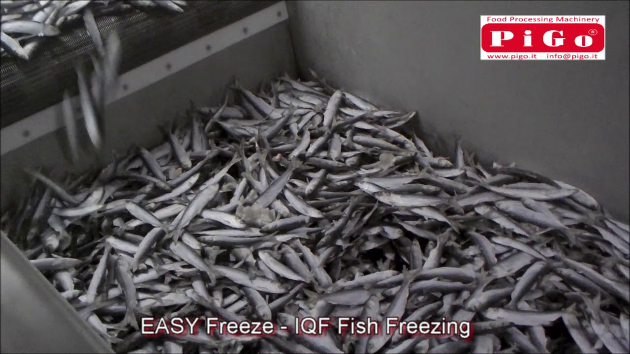 Download PIGO srl   EASY Freeze   IQF Fish Freezing   www pigo it