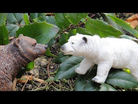 Мультфильм про бурого медведя и белого медведя