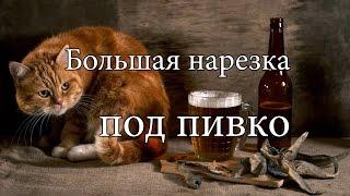 Видео с котами. Большая нарезка приколов с котами. Funny Cat 2016