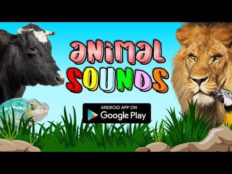 التطبيقات الكرتونية وأصوات الحيوانات خاص بالأطفال