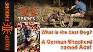 What Is The Best Dog? A German Shepherd Named Ace! K9 Training