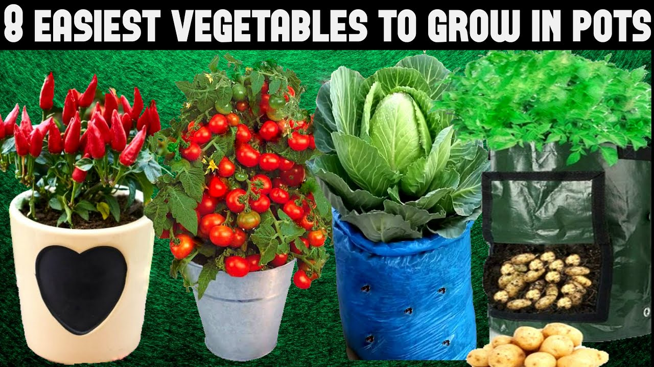 Top 8 Easy To Grow Vegetables For Beginners Seed To Harvest Youtube