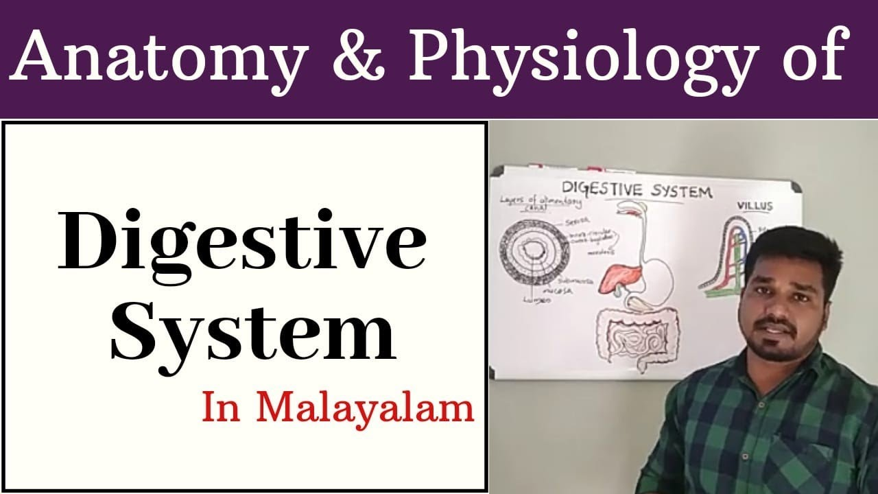 Anatomy & Physiology of Digestive system.... - YouTube