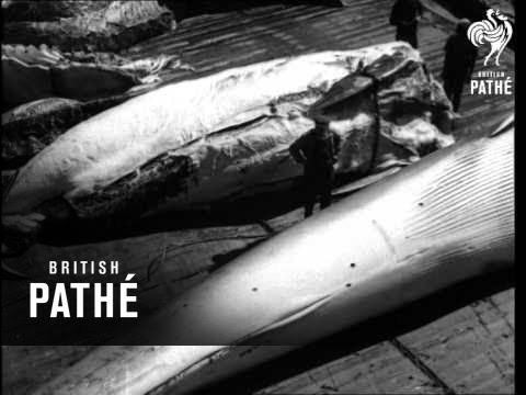 Whaling (1940-1949)