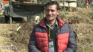 نيبال.. مصارعة الثيران تطبع انتهاء فصل الشتاء