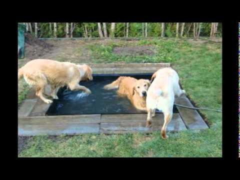 diy dog pool