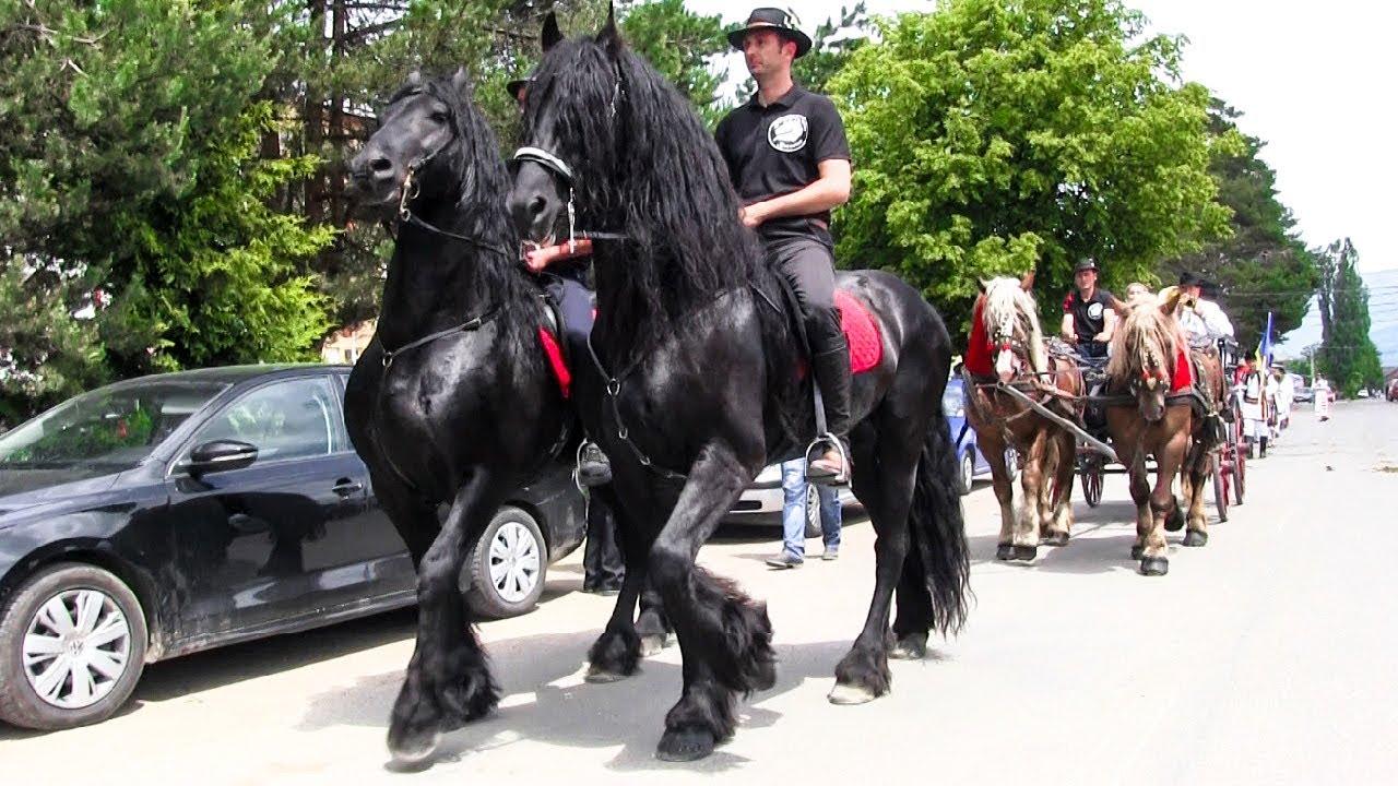 stallions - Traducere în română - exemple în engleză   Reverso Context