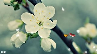 Yao Si Ting - Scarborough Fair - Lyrics HD 1080p