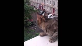 Серьезный разговор кошки с птицей 🐱😆