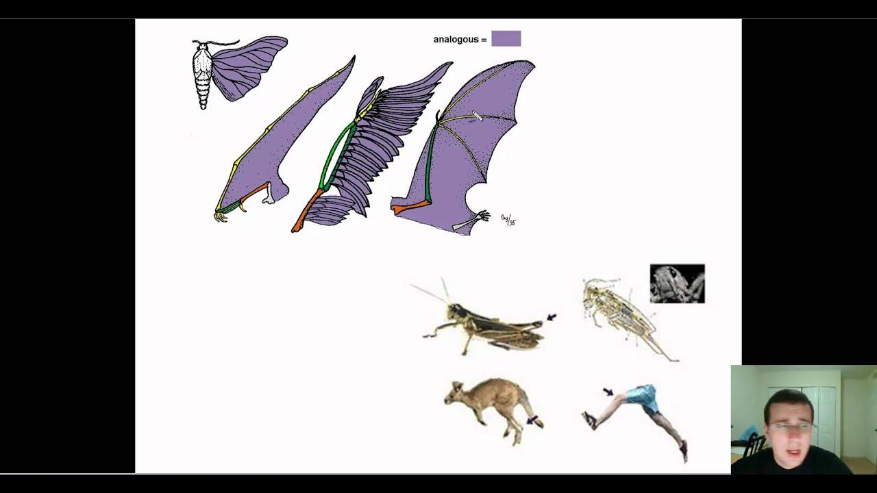 Evidence Of Evolution Part 2 Anatomy Homologous Analogous