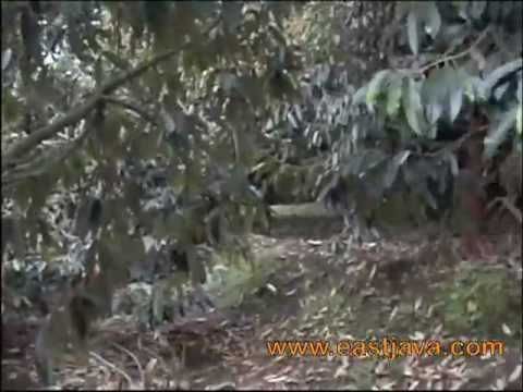 Bakti Alam Agro Wisata Pasuruan East Java