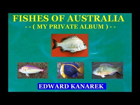 FISHES OF AUSTRALIA - (  My private album )