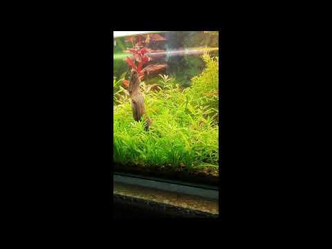 a.p.b-contest-2020-/-jungla-bajo-el-agua---108l-categoría-aquascaping