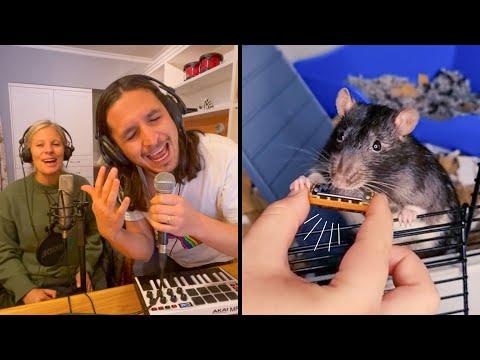 The Kiffness ft. Kiff Wife X Veronica (The Rat) on Harmonica [Live Looping Dance Mashup]