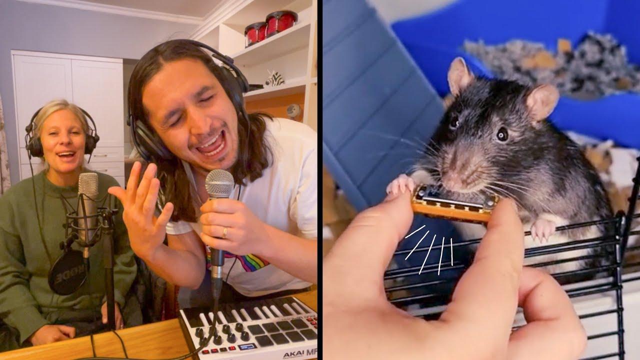 Download The Kiffness ft. Kiff Wife X Veronica (The Rat) on Harmonica [Live Looping Dance Mashup]