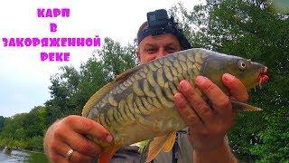 ЛОВЛЯ КАРПА УДОЧКОЙ С БОКОВЫМ КИВКОМ В ЗАКОРЯЖЕННОЙ РЕКЕ! Рыбалка с ночевкой!