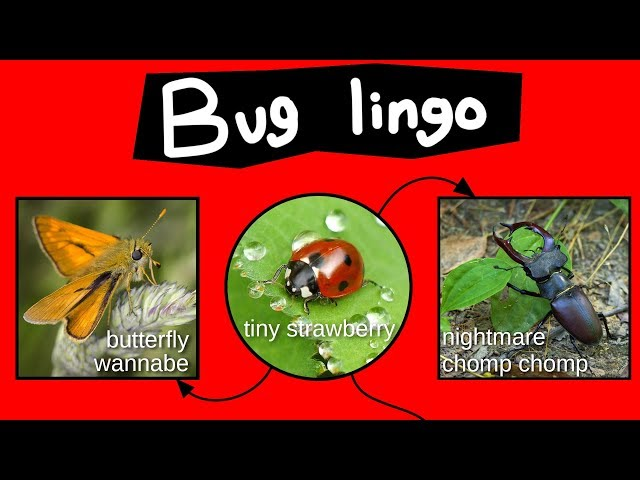 Internet Names for Bugs