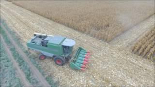 Żniwa 2016 Kukurydza. Kombajn Fendt / Corn Harvest 2016. Combine Fendt