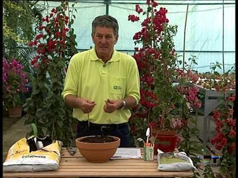 El Jardinero En Casa La Buganvilla Youtube