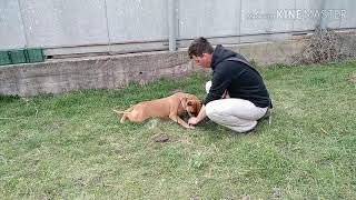 Как научить собаку команде ФУ. Часть 1