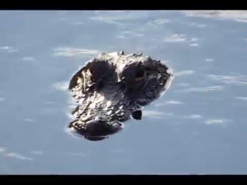 open the flood gators