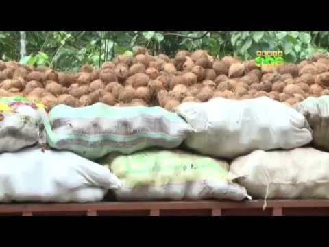 Coconut exports in Kerala climb to a new high