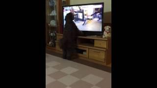 テレビの猫も気になる.