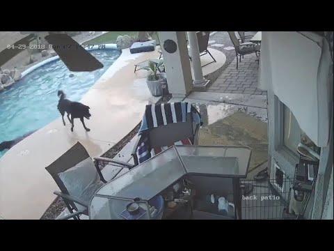 Dog Jumps in Pool to Save His Friend || ViralHog