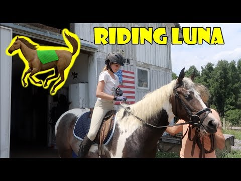 Riding Luna for the First Time 🐎 (WK 341) | Bratayley