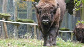 Alaska Zoo Residential & Commercial Prices, Hours & Reviews