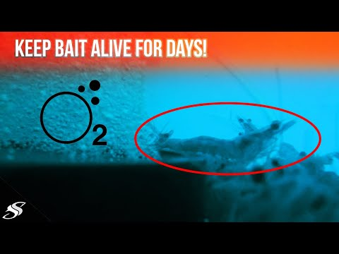 How To Keep Your FISHING Bait Alive 5x LONGER!