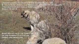 Garmin Alpha 100 Training For Livestock Guardian Dog Recall While Hiding
