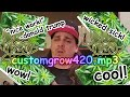Download custom grow 420.mp3 MP3 song and Music Video