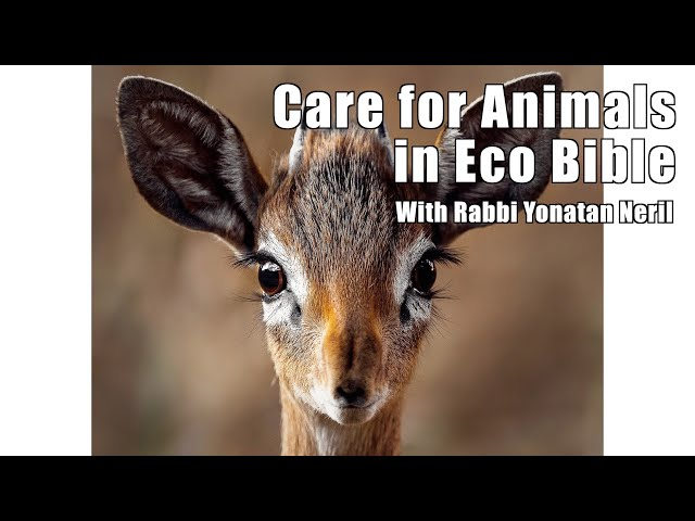 Care for Animals in Eco Bible