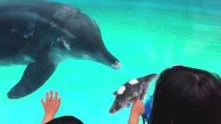 http://tokotokoto.com 沖縄美ら海水族館(おきなわちゅらうみすいぞく...