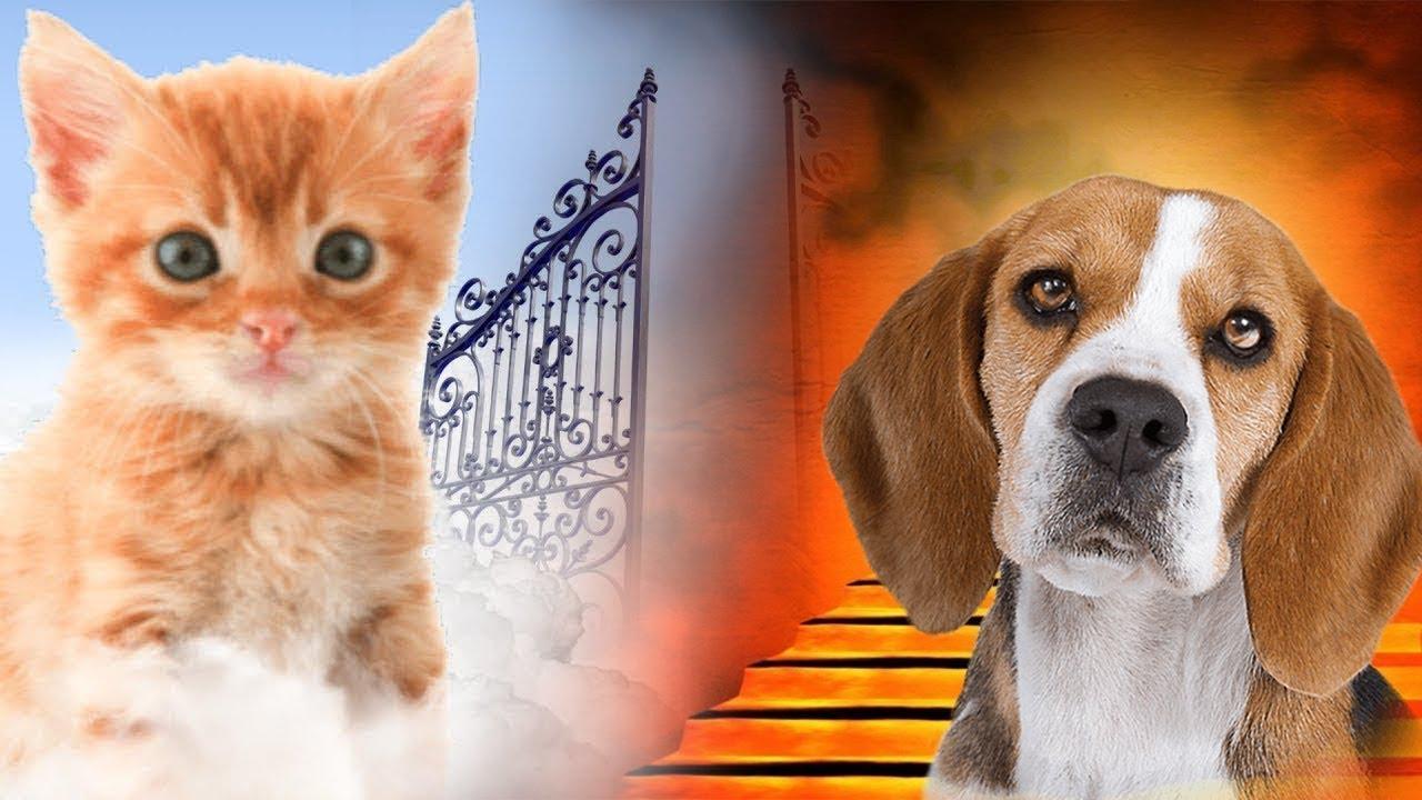 Kıyamet Gününde Hayvanlara Ne Olacak ? Bakın Hangi Hayvanlar Cennete Gidiyor ?