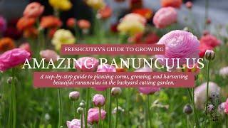 How to Grow AMAZING Ranunculus - How to Fall Plant Ranunculus Bulbs