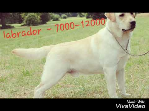 dog price list in india | price list | top 10 breeds in india