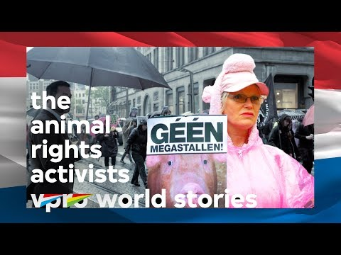 Anthropology of the Dutch: The animal rights activists